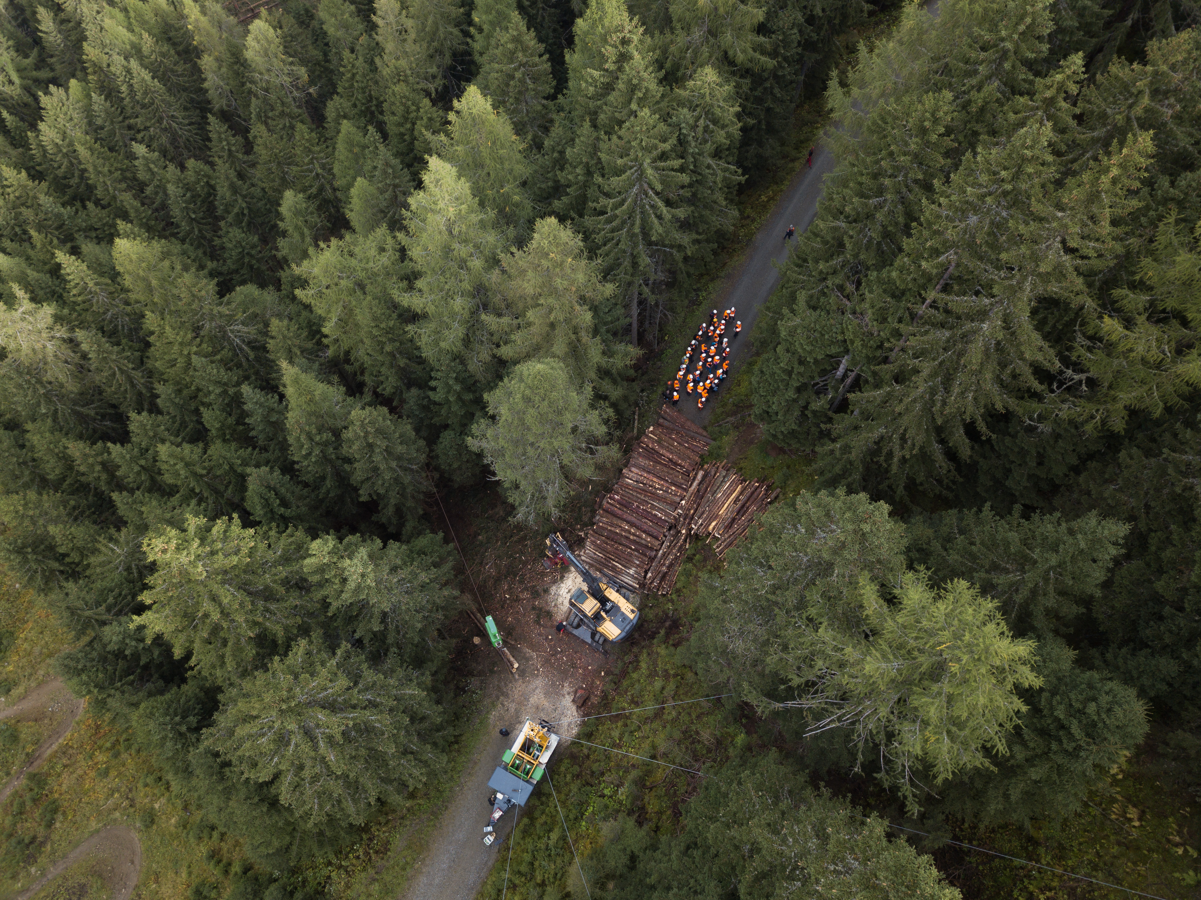 Drone footage of the group in the protective forest